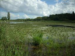 Les sites protégés des étangs de la Touche et de Purais